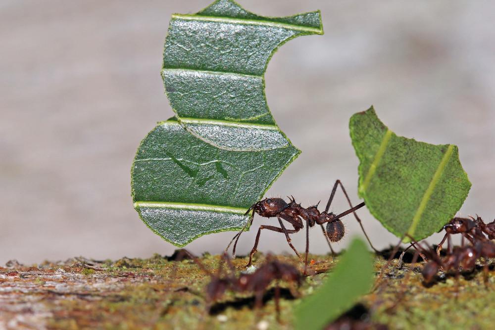 insectes rampants