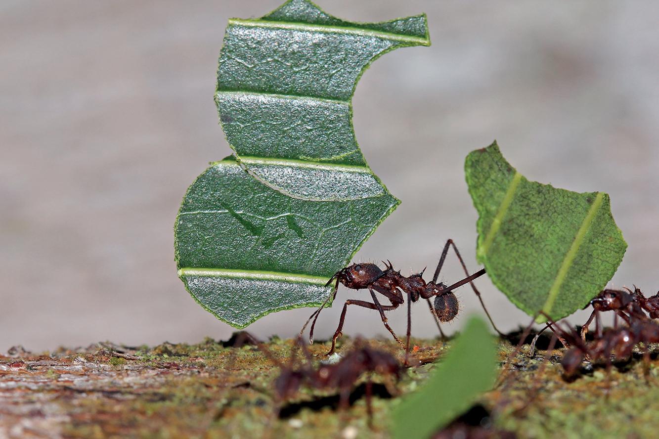 nos solutions de lutte contre les fourmis pro hygi ne solution. Black Bedroom Furniture Sets. Home Design Ideas