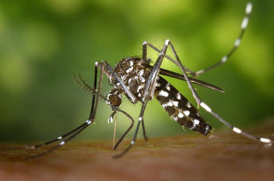 Prévention et lutte contre les moustiques