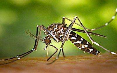 La deuxième vague a débuté, les moustiques tigres sont de retour. PHS, spécialiste dans la désinsectisation fait face à ce problème.