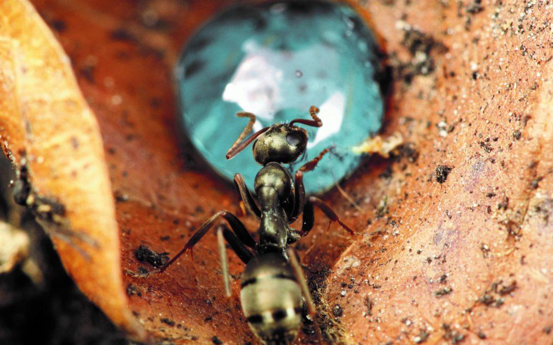 PHS – Les fourmis
